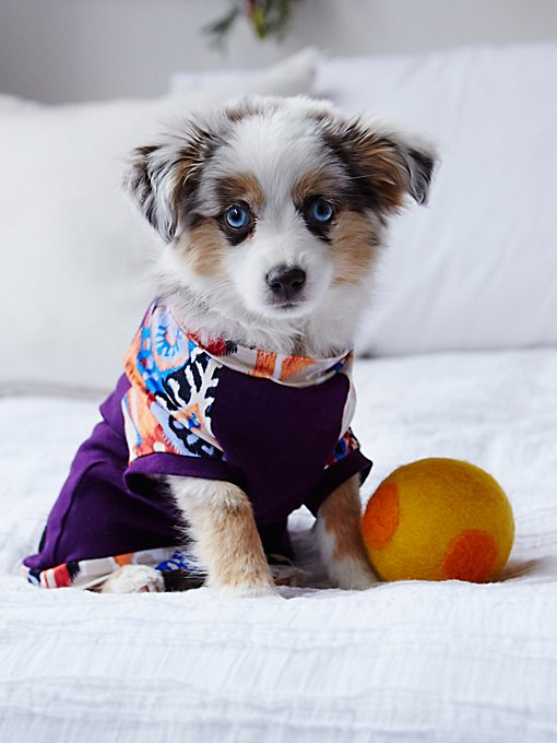 Babe Printed Dog Tee