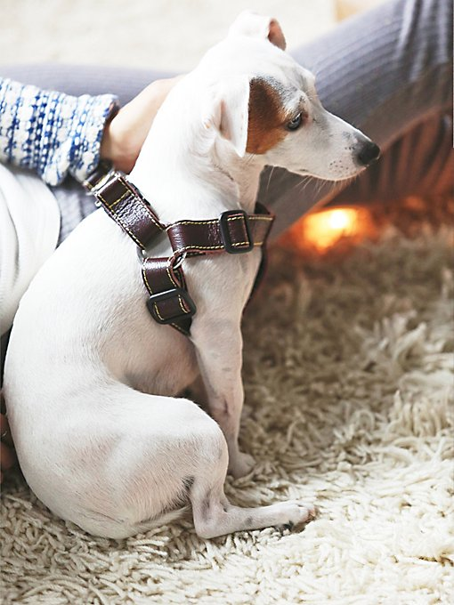Proper Pup Leather Harness